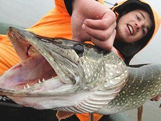 Инновационная приманка - Пеллетс Monster Fish.