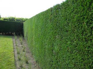 Gard verde