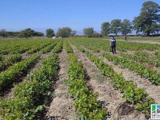 Продается виноградник