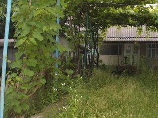Продаю участок 32 сотки земли с домом из них 12 соток виноградника