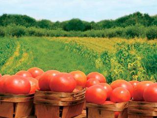 Seminte ecologice produse in Moldova,cel mai mic pret garantat.