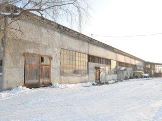 Arende, chirie, oficii, depozite Calarasi / linga calea ferata Calarasi 1800m2, сдается в аренду