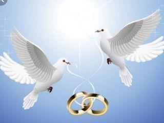 Porumbei nunti cumatrii evenimente etc.