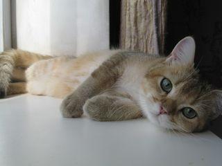 Золотой котик!!!