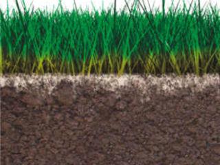 Îngrășământ 100% bio camg pentru plante sănătoase și culturi agricole bogate
