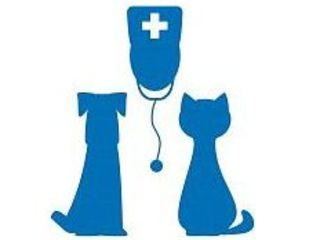 Ветеринарная помощь, вызов врача на дом
