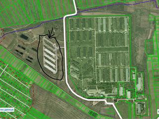 La vinzare ferma de pasari din Floreni, Anenii Noi