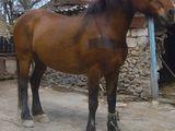 Vind cal frumos,sanatos si puternic
