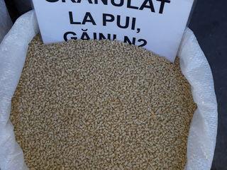 Producem  hrană granulată de calitate pentru:pui,găini,prepelițe,Iepuri,purcei,capre,alt.