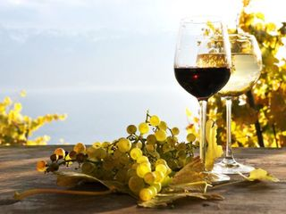 Se vinde vin Cabernet, Moldova, Cuderca