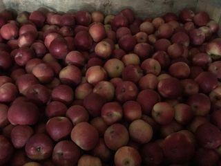 Яблоки Аидаред .