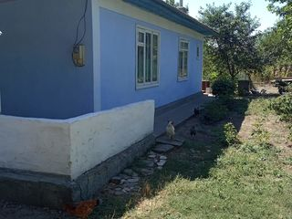 Vind casa la Vasilica