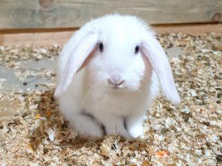 Акция - Декоративные кролики - бесплатная доставка