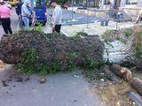 Taierea copacilor ce incurca constructiilor, defrisare, lucrari la inaltime
