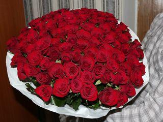 Trandafiri preț angro de la 15 lei