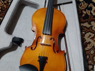 Viola alit