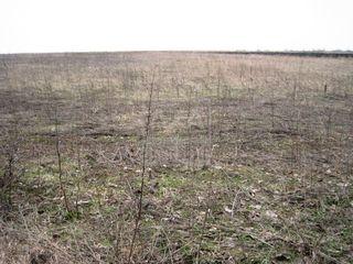 Vânzare teren agricol 3 - ha! Băcioi!