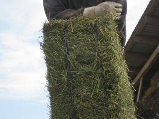 Продается тюки из смеси луцерны, еспарчето и другие травы