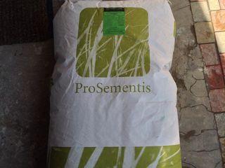 Подам газонные семена из Германии !