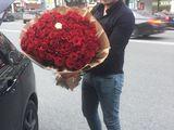 51 trandafiri 599 lei/101 trandafiri 850 lei. Livrare!