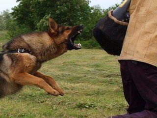 Воспитание и дрессировка собак.