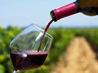 wine tour ! Проведу для вас винную экскурсию