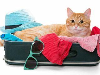 Perfectarea documentelor pentru plecarea peste hotare a animalelor de companie