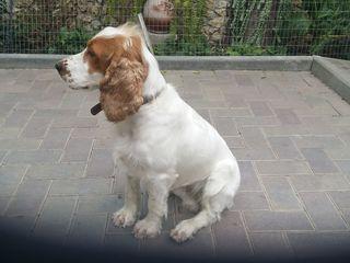пропала собака / s-a pierdut cîinele