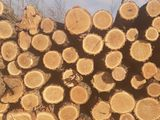 lemne tari foate bune la un pret avantajos.