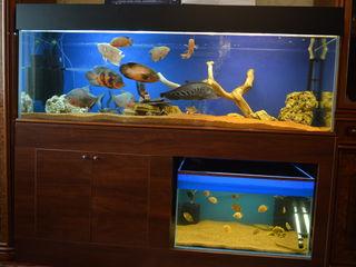 Vind acvarium aproximativ de 500 litri + acvarium de 160litri