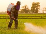 Erbicide insecticide