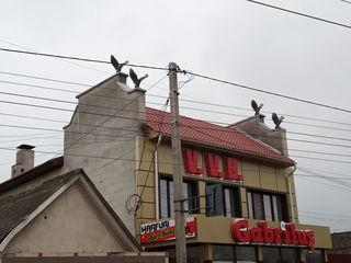 Apartament cu suprafaţa de 91 m.p., situat mun. Bălţi, str. Kiev 127,ap.2, şi terenul aferent