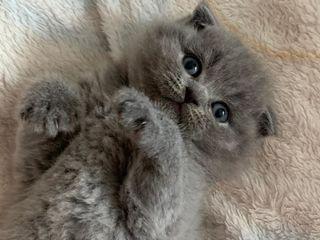 Сегодня! Чистокровные котята/ паспорт/