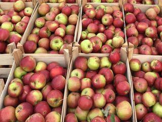Яблоки на бус