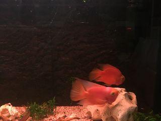 Аквариум 250литров с рыбками