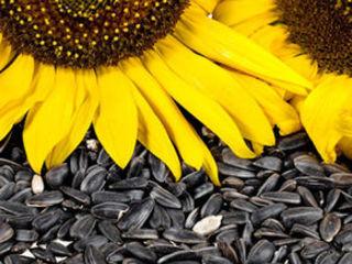 Cumpar floarea-soarelui