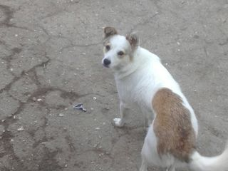 Caut cinele / ищу собаку