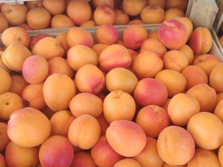 куплю абрикосы,вишню,черешню,персик в большом количестве