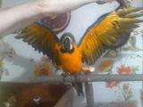 возьмем на достойное содержание любых видов птиц.