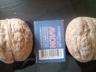 Саженцы из крупного  грецкого ореха  40 лей