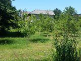 дом с озером и ореховым садом