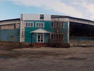 Fabrica de conserve din Drochia