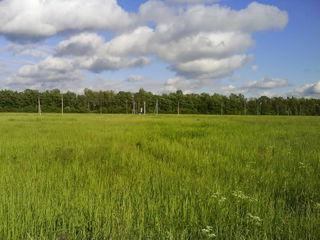Продаю 2 ГА земли. Участок рядом с рекой Бык, огорожен дамбой, трасса почти к самому полю.