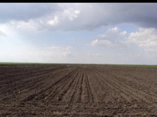 Lot de pamint arabil in Cimislia (2.05 hectare)
