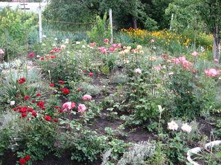 Срочно продается дача: дом с садовым участком!