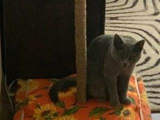 Scarpinator pentru pisici