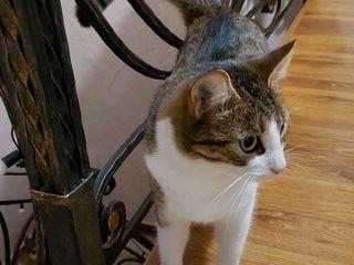 Va rog mult, cine a vazut aceste pisicuţe.