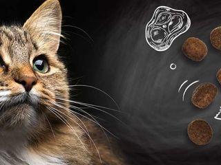 """консервы для Кошек.. """" Leonardo """" ( 0.4 кг ) - 40 лей"""