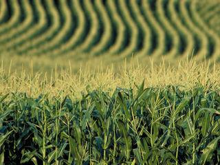 Anenii Noi 50 Ha teren agricol