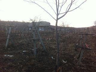 Urgent vind casa in Pitusca R-nul Calarasi,ieftin